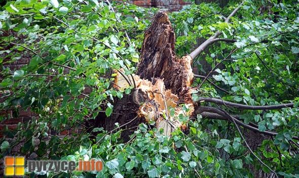 Drzewa na wałach stwarzają zagrożenie